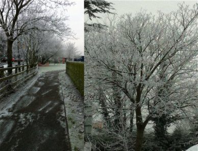 icytrees